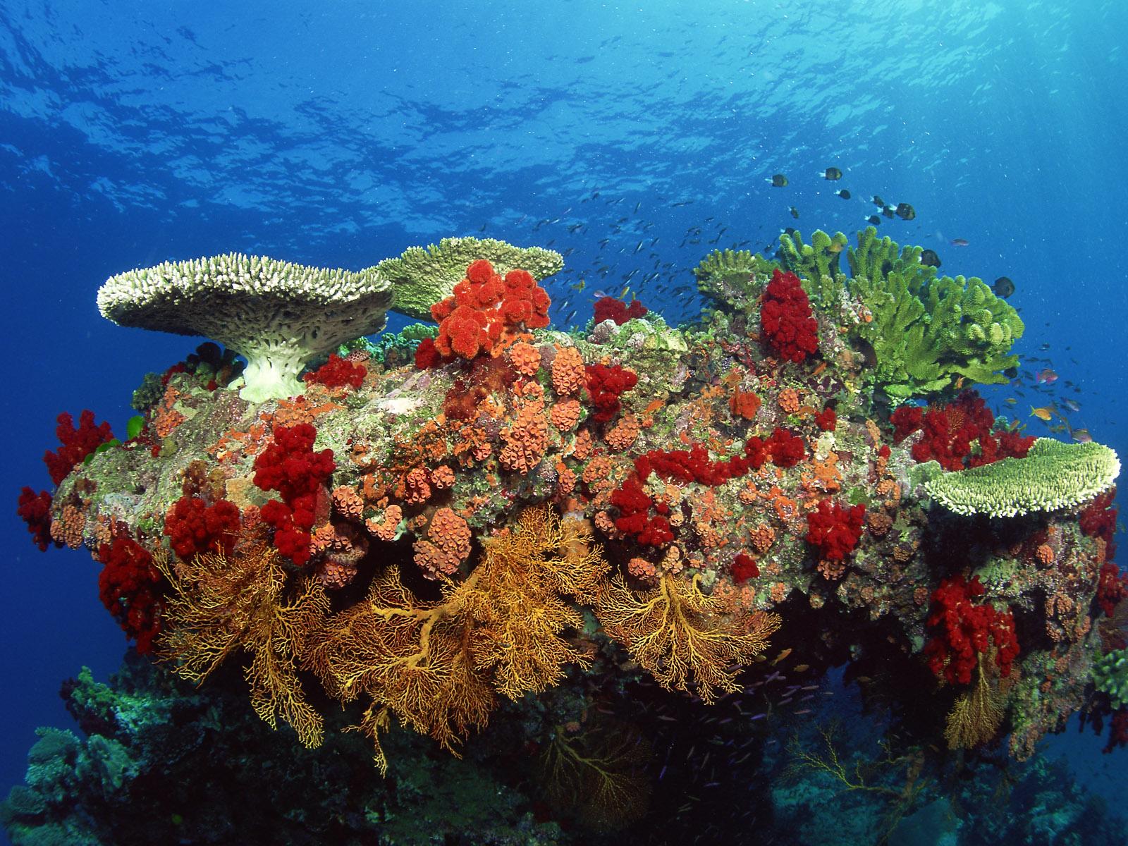 море, риф, кораллы