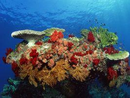 Фото бесплатно кораллы, море, водоросли