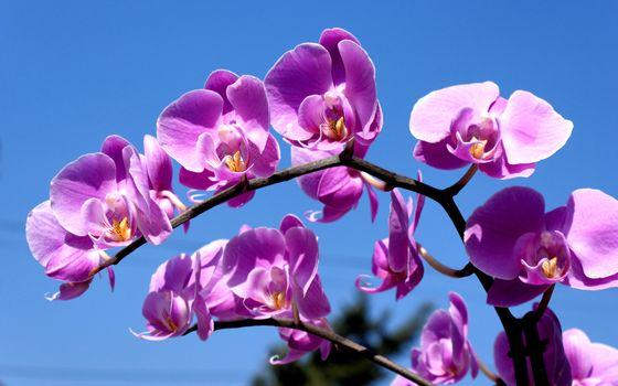 Фото бесплатно орхидея, ветка, лепестки