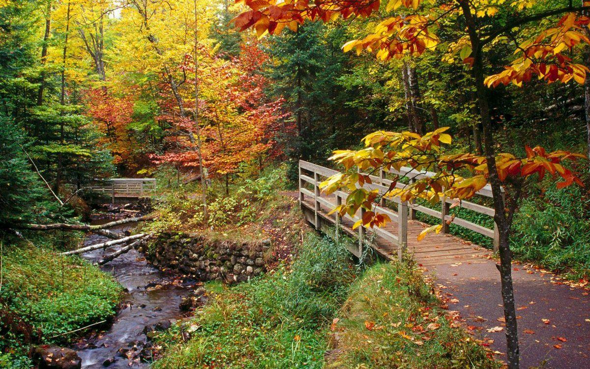 Фото бесплатно деревья, мосты, камни - на рабочий стол