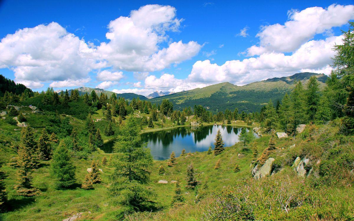 Фото бесплатно озеро, вода, лес, деревья, трава, зеленая, камни, природа, природа
