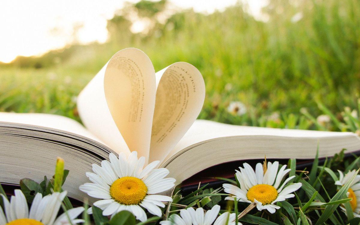 Фото бесплатно поле, ромашки, книга, страницы, сердечко, цветы, природа, разное, разное