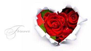 Фото бесплатно розы, букет, сердце, надпись, красные, лепестки, аромат, цветы