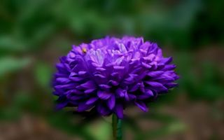 Фото бесплатно Жук, фон, цветок