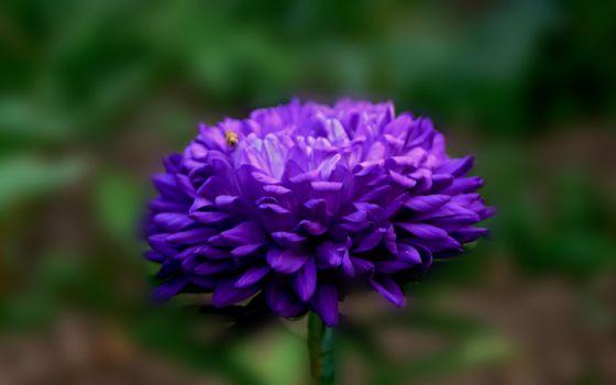 Photo free beetle, background, flower
