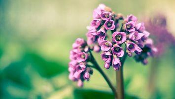 Фото бесплатно цветок, лепестки, тычинка, пестик, стебель, трава, сиреневый, лето, поле, луг, цветы