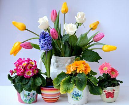 Фото бесплатно ваза, тюльпаны, розы