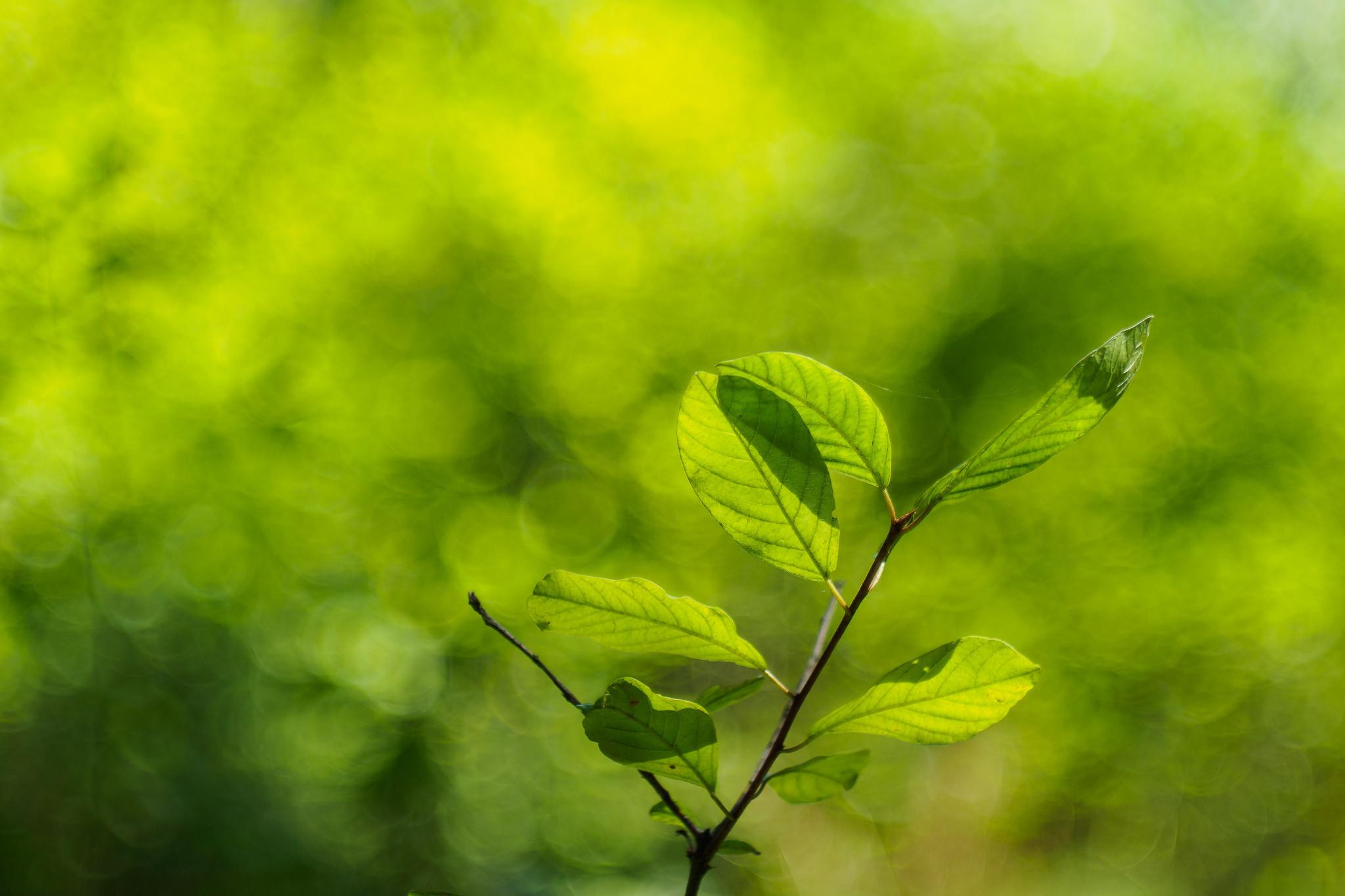 Обои ветка, листья, дерево, куст