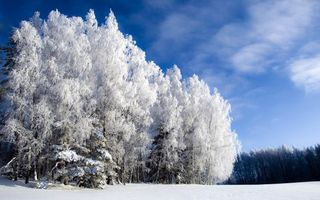 Фото бесплатно небо, иней, деревья