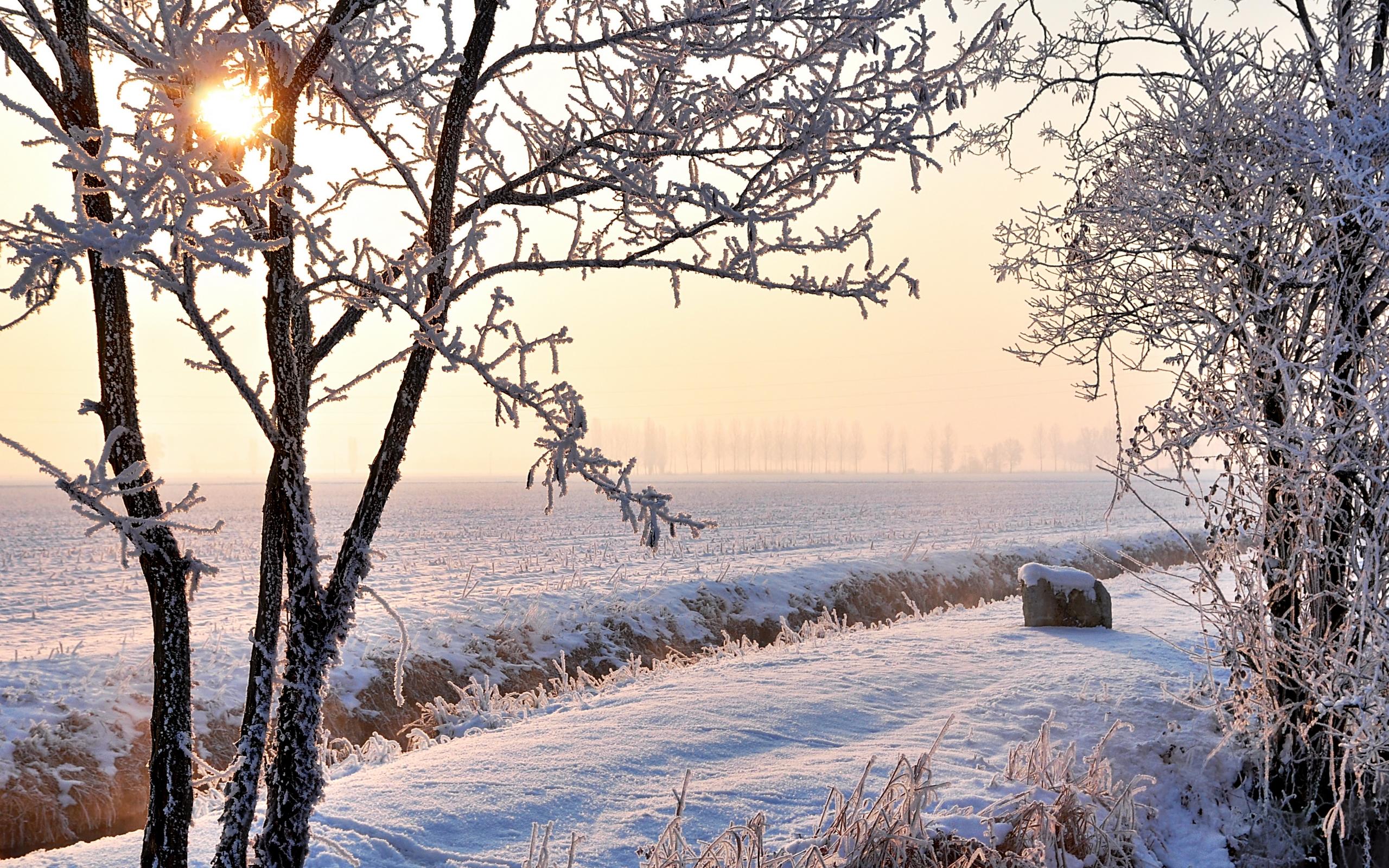 зима, снег, поле