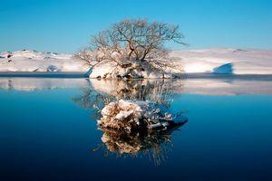 Бесплатные фото зима,снег,деревья,вода,трава,мороз,солнце