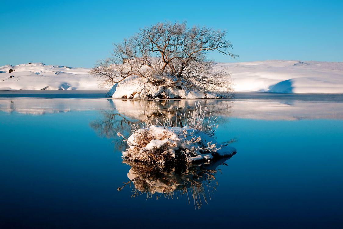 Фото бесплатно зима, снег, деревья - на рабочий стол