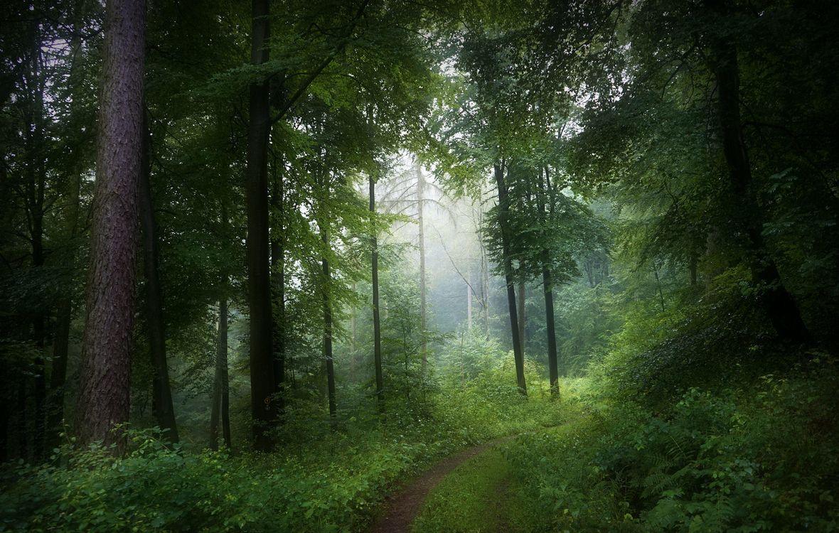Фото бесплатно лес, деревья, дорога, туман, природа - на рабочий стол