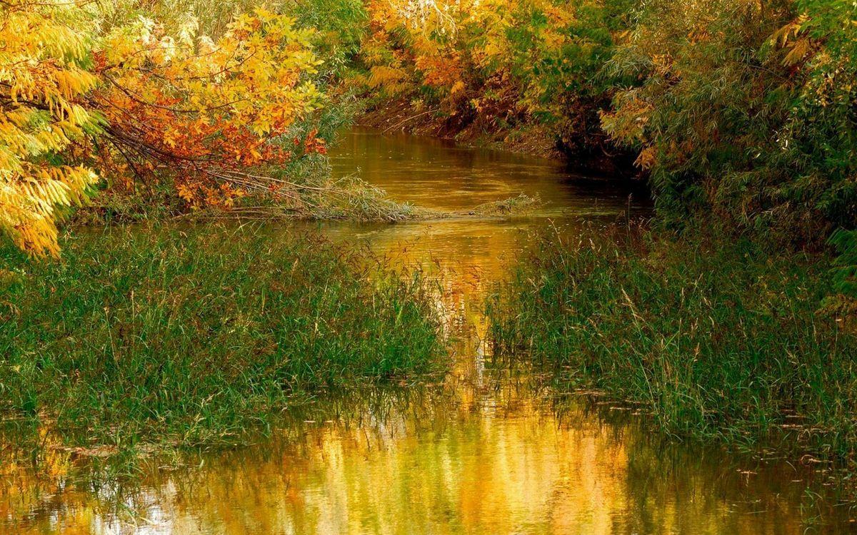 Фото бесплатно река, растительность, деревья - на рабочий стол