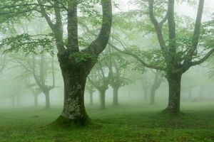 Photo free forest, trees, fog