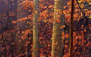 Бесплатные фото осень,лес,деревья,стволы,ветви,листва оранжевая