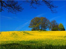 Фото бесплатно поле, деревья, цветы
