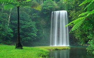 Бесплатные фото водопад,лес,река