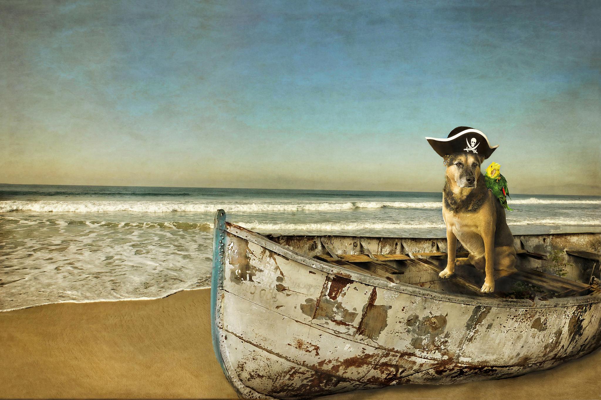 Обои море, берег, лодка, собака пират