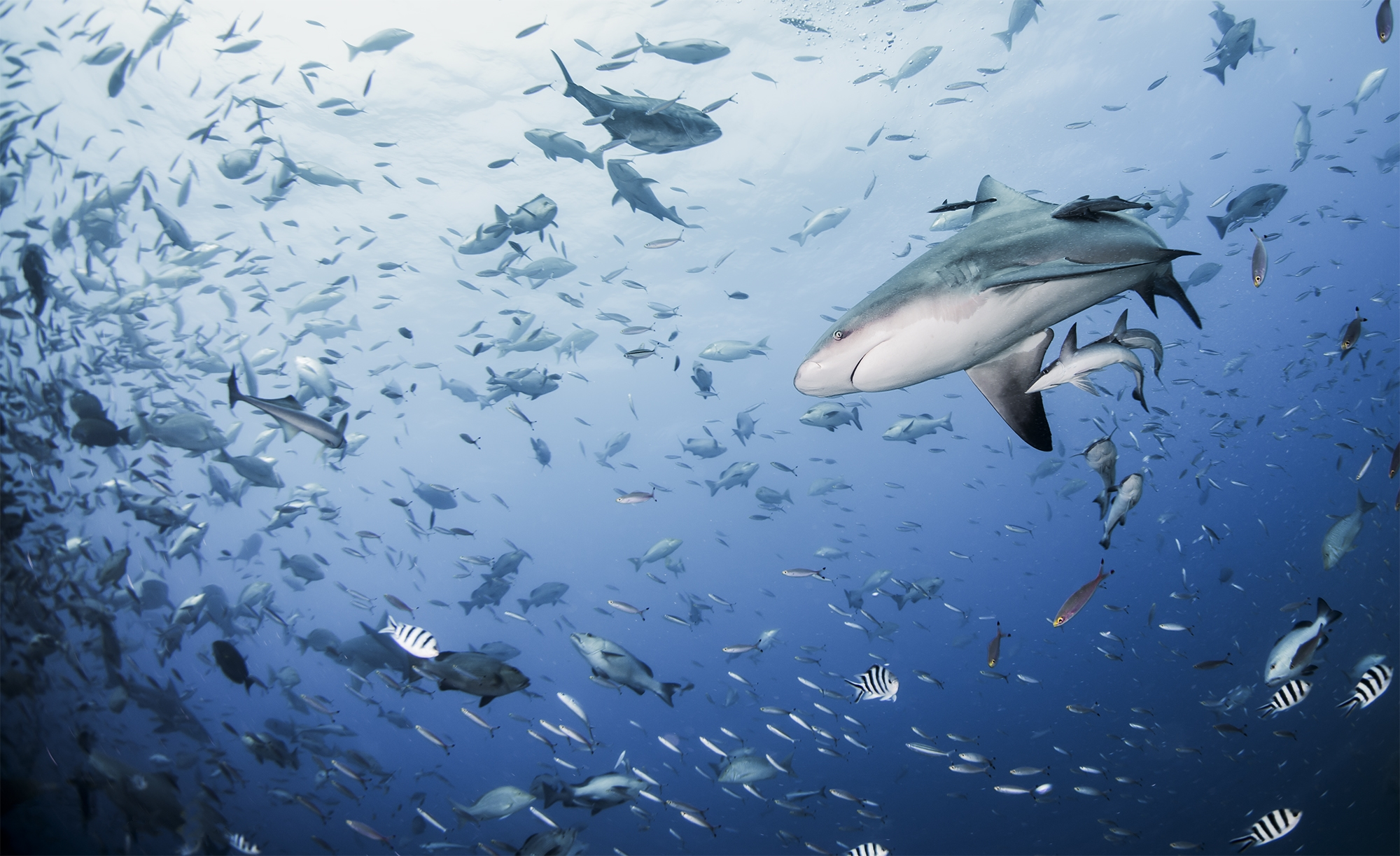 обои море, рыбы, акула, подводный мир картинки фото