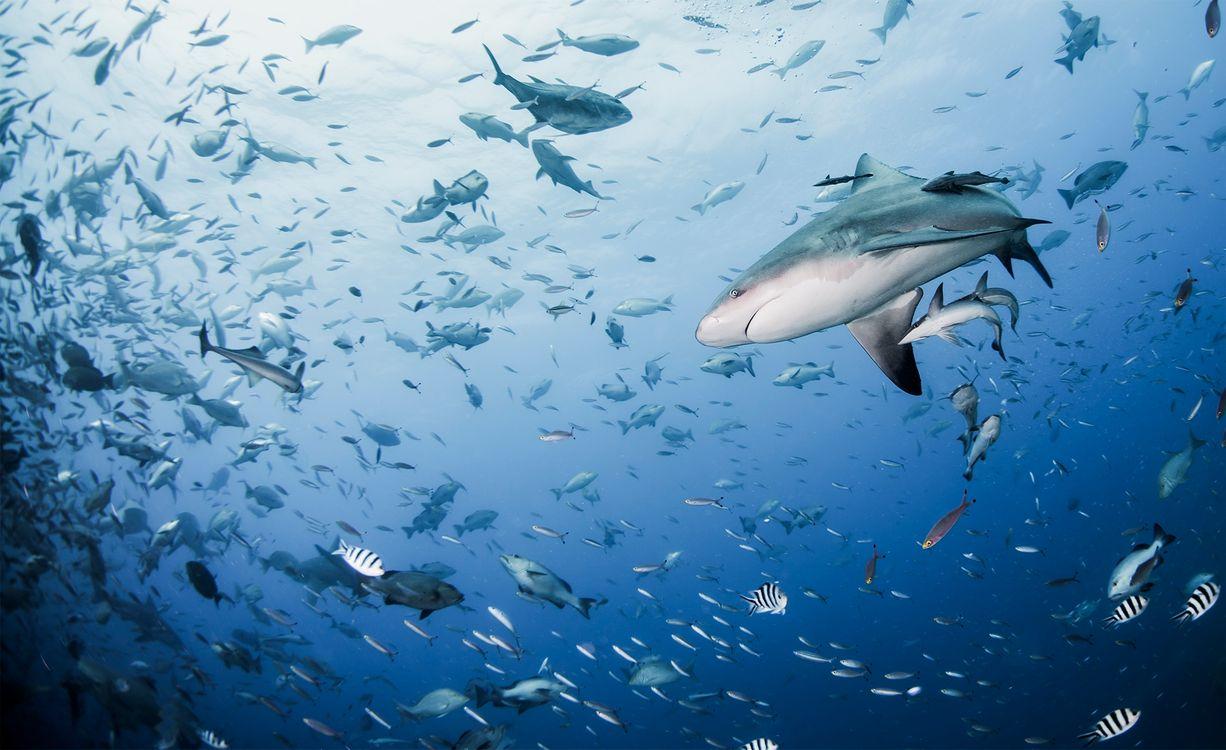 Фото бесплатно подводный мир, рыба, акула - на рабочий стол