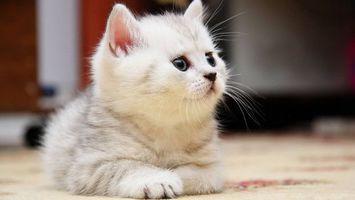 Фото бесплатно пушистый, котенок