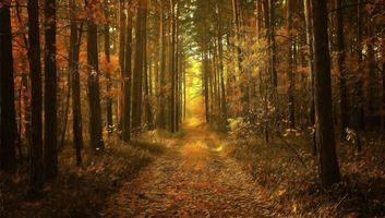 Бесплатные фото осень, лес, деревья, дорога, туман, art