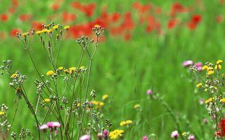 Бесплатные фото поле,трава,зеленая,цветы,разные,лето
