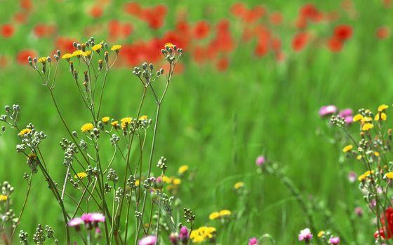Заставки трава, поле, разные
