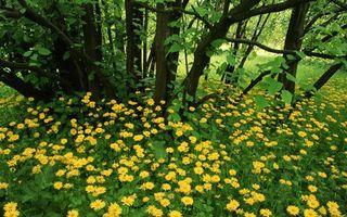 Бесплатные фото лето,лес,поляна,цветы,трава,деревья
