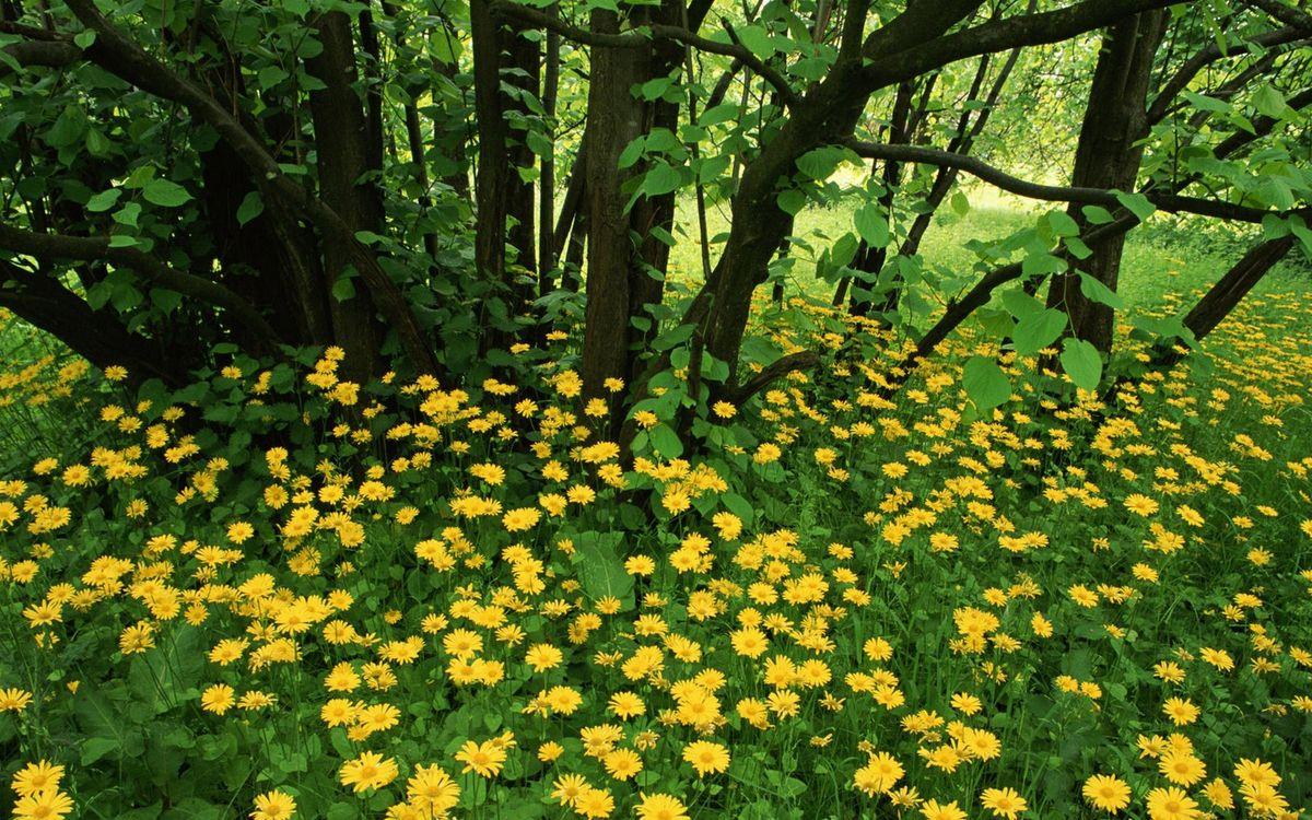 Фото бесплатно лето, лес, поляна, цветы, трава, деревья, природа