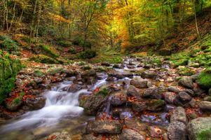 Бесплатные фото осень,лес,деревья,река,камни,природа