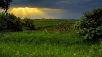 Фото бесплатно трава, кустарник, деревья