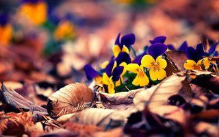 Фото бесплатно осень, цветы, листопад