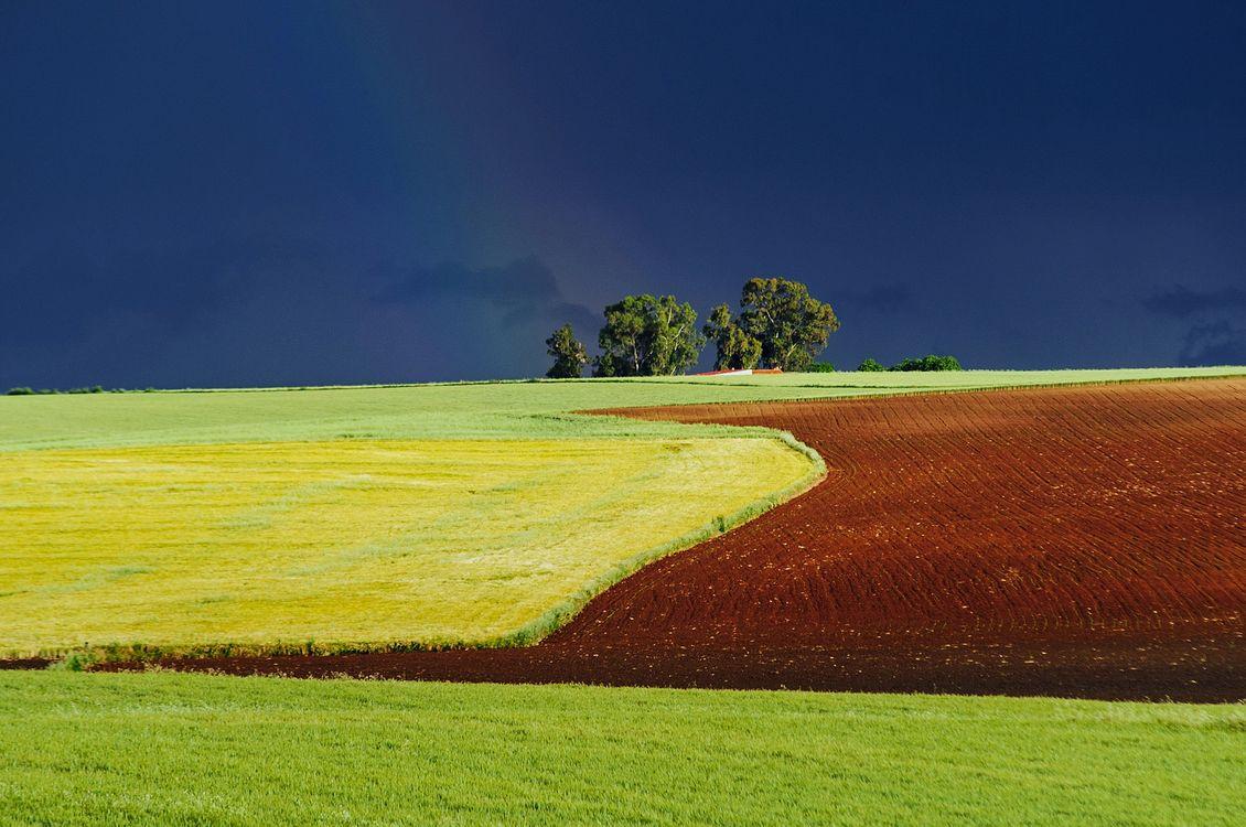 Фото бесплатно поле, холмы, тучи, деревья, пейзаж, пейзажи