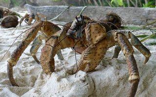 Бесплатные фото краб,клешни,ноги,усы,песок