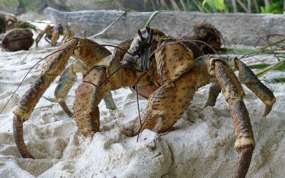 Фото бесплатно краб, клешни, ноги