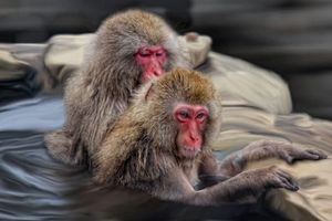 Заставки обезьяны, животные, art