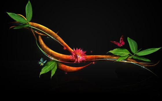 Фото бесплатно веточка, бабочка, черный фон