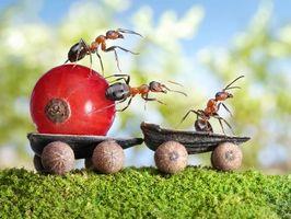 Бесплатно муравьи, насекомые - фото красивые