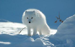 Бесплатные фото писец,белый,зима,снег,следы,трава
