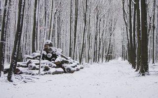 Бесплатные фото зима,снег,лес,деревья,бревна,дорога