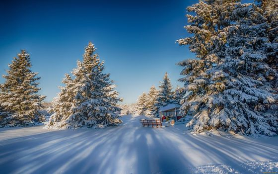 Photo free country house, forest, drifts