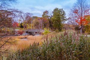Бесплатные фото Англия,Hingham,Массачусетс,осень