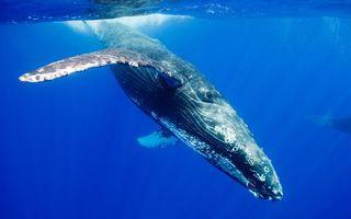 Бесплатные фото океан,поверхность,кит,плавники,глаза,заставка