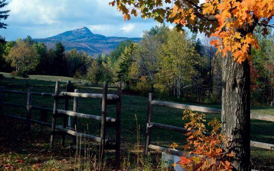 Фото бесплатно старый забот, дерево, осень