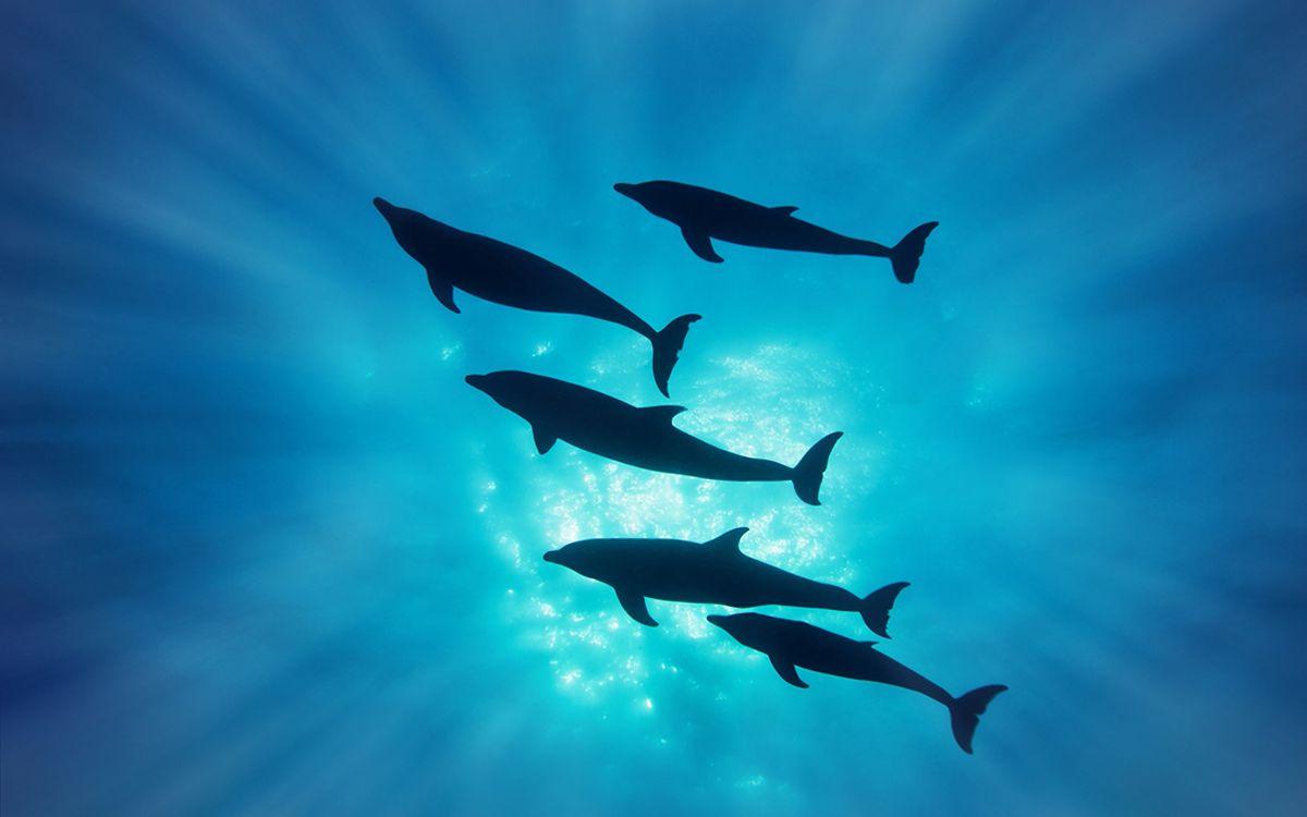 Фото бесплатно дильфины, плавники, хвосты - на рабочий стол