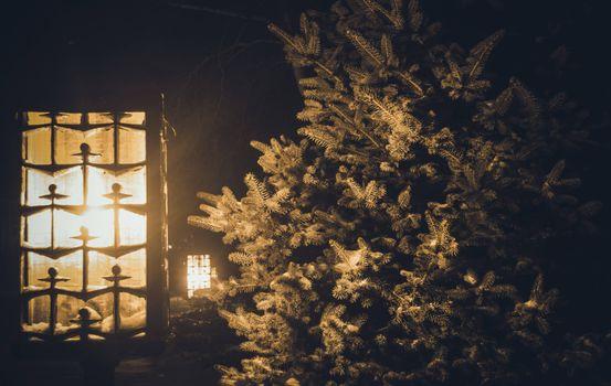 Бесплатные фото елка,окно,снег