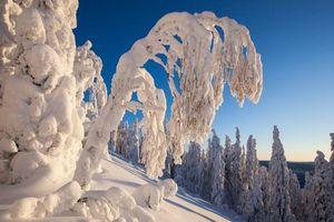 Фото бесплатно Финляндия, Лиекса, зима, снег, сугробы, деревья, пейзаж