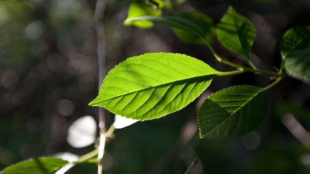Фото бесплатно листик, ветвь